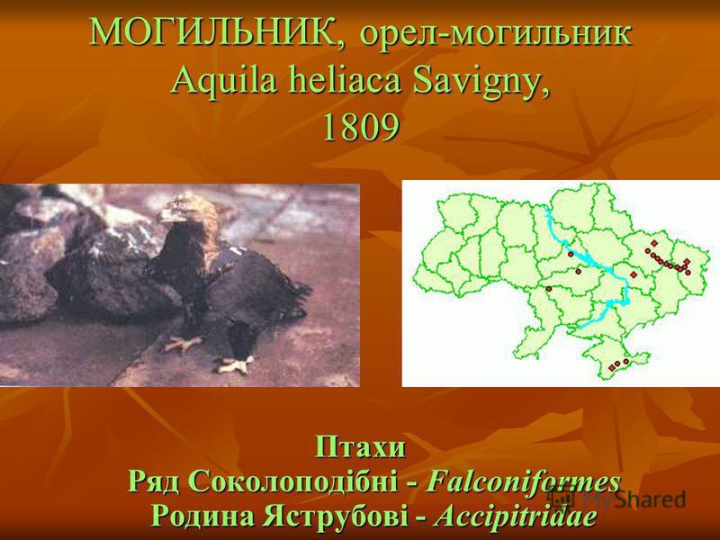 МОГИЛЬНИК, орел-могильник Aquila heliaca Savigny, 1809