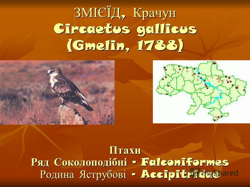ЗМІЄЇД, Крачун Circaetus gallicus (Gmelin, 1788) Птахи Ряд Соколоподібні - Falconiformes Родина Яструбові - Accipitridae