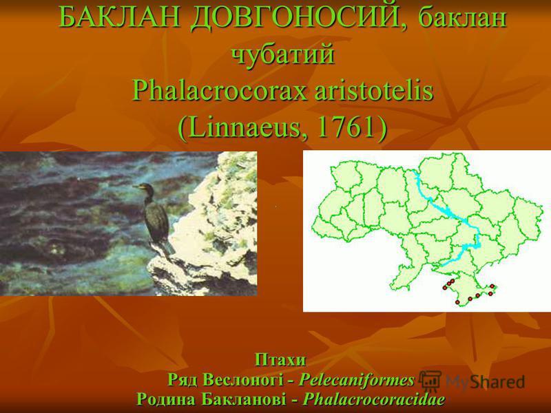 БАКЛАН ДОВГОНОСИЙ, баклан чубатий Phalacrocorax aristotelis (Linnaeus, 1761) Птахи Ряд Веслоногі - Pelecaniformes Родина Бакланові - Phalacrocoracidae