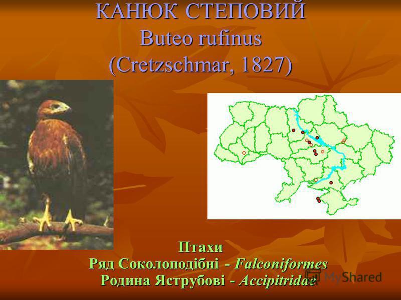 КАНЮК СТЕПОВИЙ Buteo rufinus (Cretzschmar, 1827) Птахи Ряд Соколоподібні - Falconiformes Родина Яструбові - Accipitridae