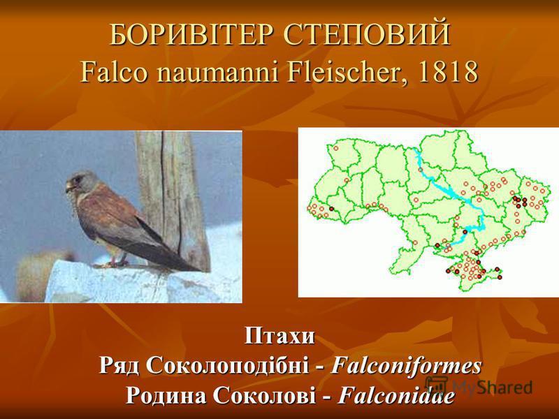 БОРИВІТЕР СТЕПОВИЙ Falco naumanni Fleischer, 1818 Птахи Ряд Соколоподібні - Falconiformes Родина Соколові - Falconidae