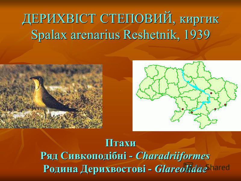 ДЕРИХВІСТ СТЕПОВИЙ, киргик Spalax arenarius Reshetnik, 1939 Птахи Ряд Сивкоподібні - Charadriiformes Родина Дерихвостові - Glareolidae