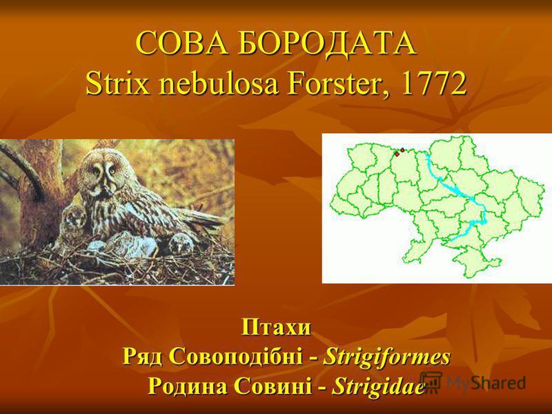 СОВА БОРОДАТА Strix nebulosa Forster, 1772 Птахи Ряд Совоподібні - Strigiformes Родина Совині - Strigidae