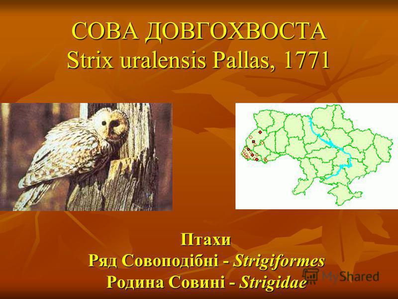 СОВА ДОВГОХВОСТА Strix uralensis Pallas, 1771 Птахи Ряд Совоподібні - Strigiformes Родина Совині - Strigidae Птахи Ряд Совоподібні - Strigiformes Родина Совині - Strigidae
