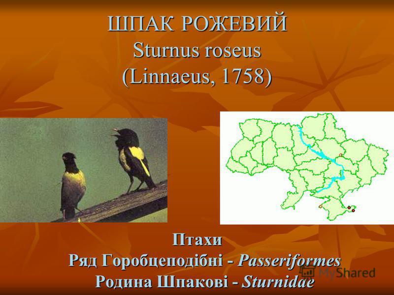 ШПАК РОЖЕВИЙ Sturnus roseus (Linnaeus, 1758) Птахи Ряд Горобцеподібні - Passeriformes Родина Шпакові - Sturnidae