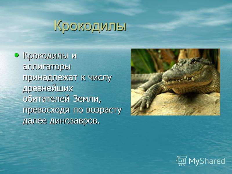 Крокодилы Крокодилы Крокодилы и аллигаторы принадлежат к числу древнейших обитателей Земли, превосходя по возрасту далее динозавров. Крокодилы и аллигаторы принадлежат к числу древнейших обитателей Земли, превосходя по возрасту далее динозавров.