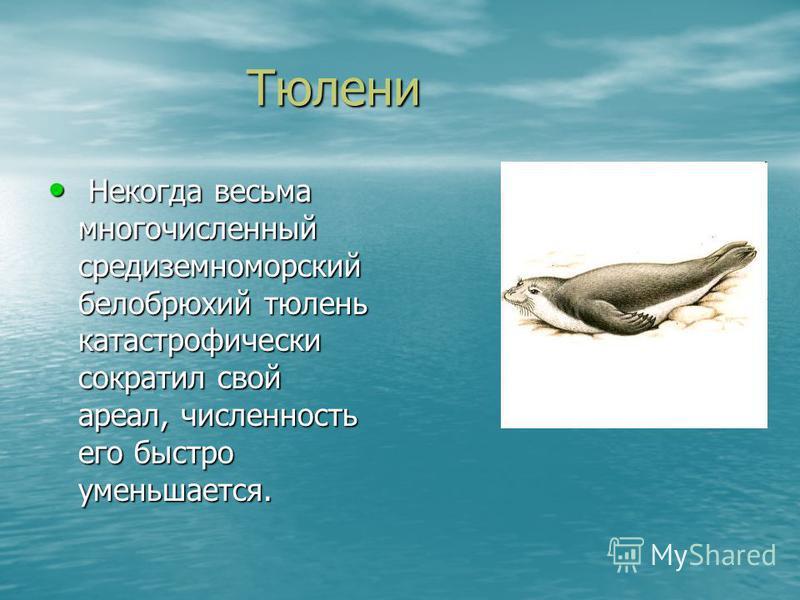 Тюлени Тюлени Некогда весьма многочисленный средиземноморский белобрюхий тюлень катастрофически сократил свой ареал, численность его быстро уменьшается. Некогда весьма многочисленный средиземноморский белобрюхий тюлень катастрофически сократил свой а