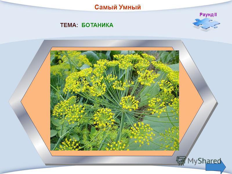 Самый Умный Раунд II 3. Растение с мелкими листьями и желтыми соцветиями, употребляется как приправа в пищу, в соление? ТЕМА: БОТАНИКА