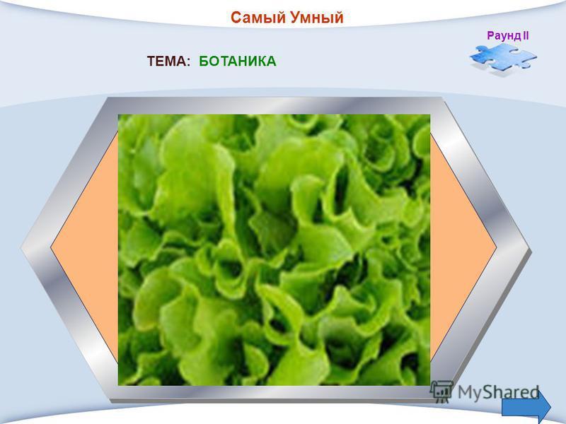 Самый Умный Раунд II 4. Овощное растение, идущее в пищу, и кушанье из мелко нарезанных продуктов ТЕМА: БОТАНИКА