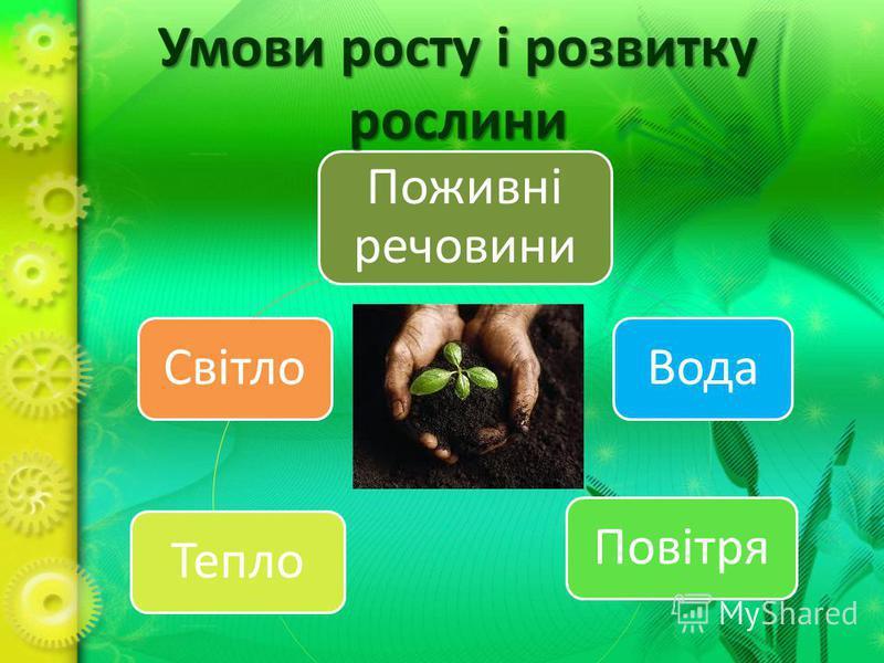 Поживні речовини ВодаПовітряТеплоСвітло Умови росту і розвитку рослини