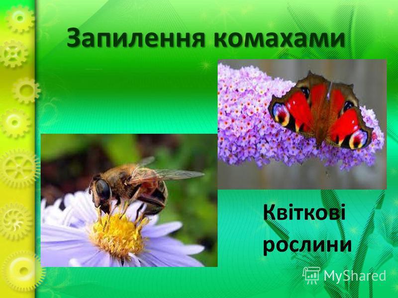 Запилення комахами Квіткові рослини