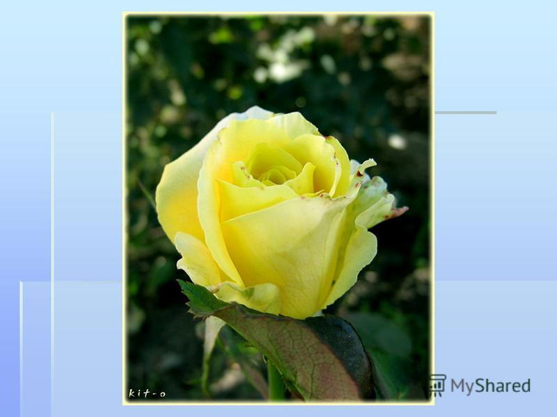 Берегите Землю! Берегите Жаворонка в голубом зените, Бабочку на стебле повилики, На тропинке солнечные блики… М.Дудин М.Дудин