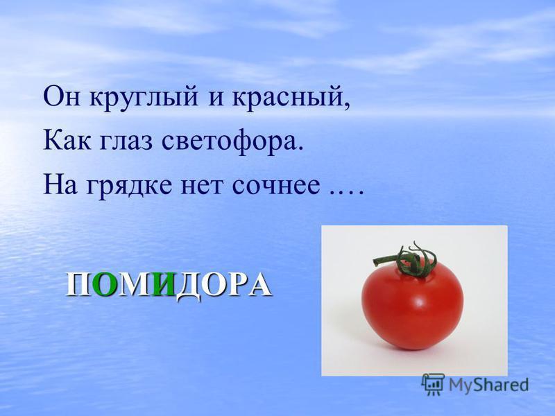 ПОМИДОРА Он круглый и красный, Как глаз светофора. На грядке нет сочнее.…