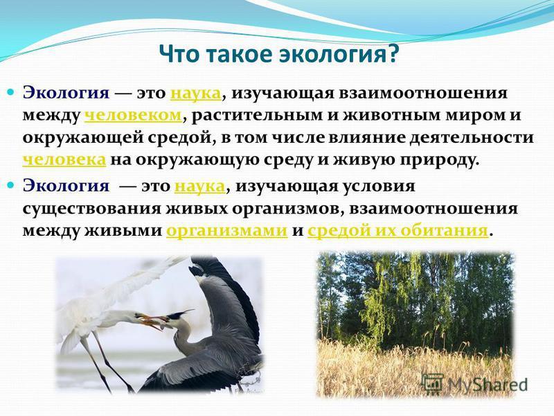Что такое экология? Экология это наука, изучающая взаимоотношения между человеком, растительным и животным миром и окружающей средой, в том числе влияние деятельности человека на окружающую среду и живую природу.наука человеком человека Экология это