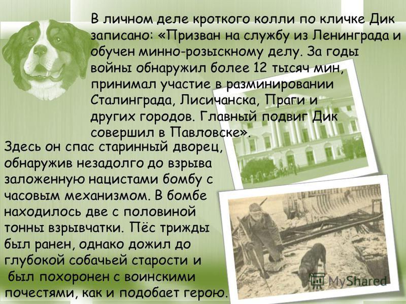 . Здесь он спас старинный дворец, обнаружив незадолго до взрыва заложенную нацистами бомбу с часовым механизмом. В бомбе находилось две с половиной тонны взрывчатки. Пёс трижды был ранен, однако дожил до глубокой собачьей старости и был похоронен с в