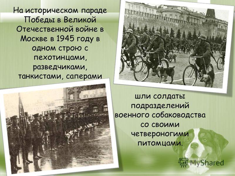 На историческом параде Победы в Великой Отечественной войне в Москве в 1945 году в одном строю с пехотинцами, разведчиками, танкистами, саперами шли солдаты подразделений военного собаководства со своими четвероногими питомцами.