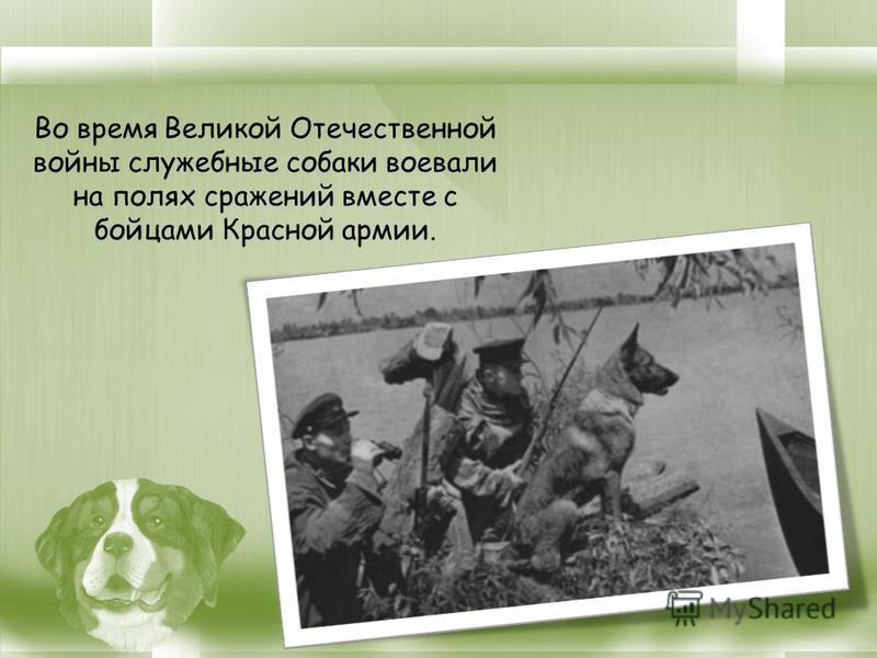 Во время Великой Отечественной войны служебные собаки воевали на полях сражений вместе с бойцами Красной армии.