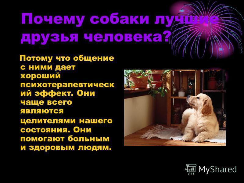 Почему собаки лучшие друзья человека? Потому что общение с ними дает хороший психотерапевтический эффект. Они чаще всего являются целителями нашего состояния. Они помогают больным и здоровым людям.