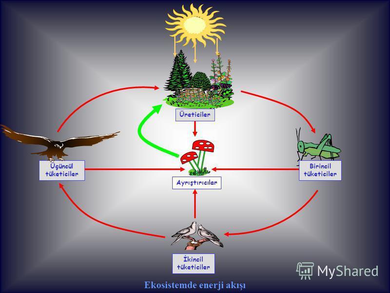 Üreticiler Üçüncül tüketiciler Birincil tüketiciler İkincil tüketiciler Ekosistemde enerji akışı Ayrıştırıcılar