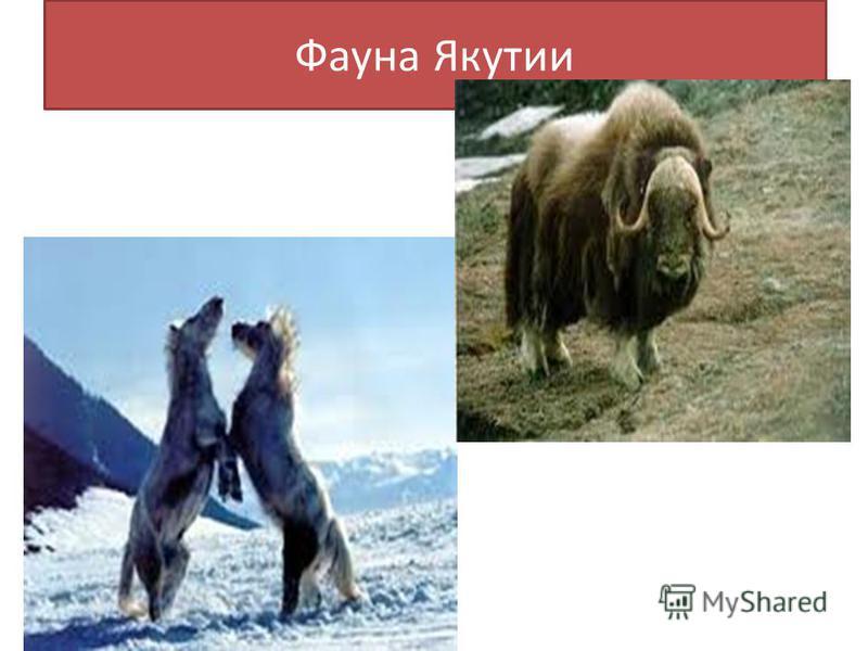 Фауна Якутии