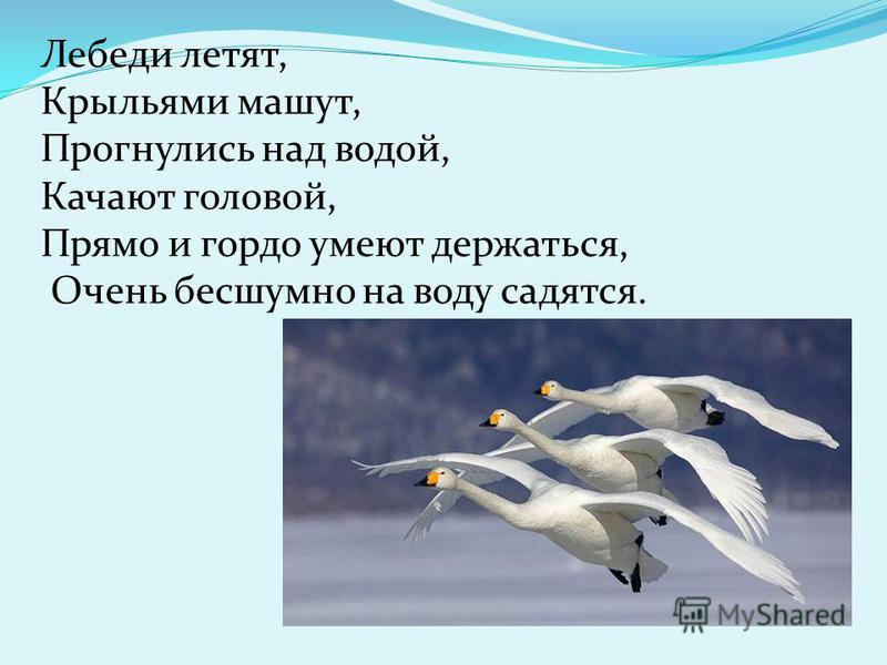 Лебеди летят, Крыльями машут, Прогнулись над водой, Качают головой, Прямо и гордо умеют держаться, Очень бесшумно на воду садятся.