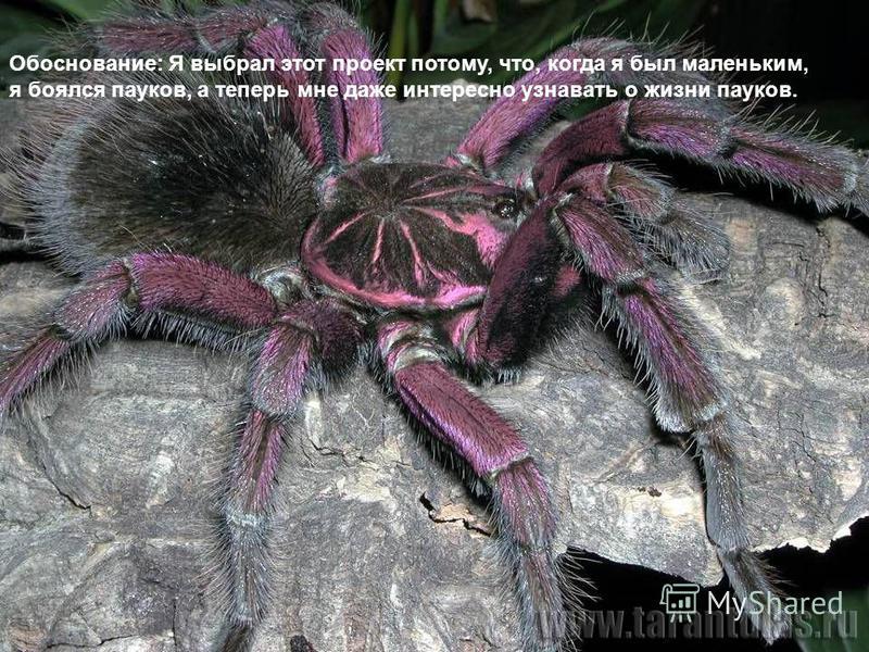 Обоснование: Я выбрал этот проект потому, что, когда я был маленьким, я боялся пауков, а теперь мне даже интересно узнавать о жизни пауков.