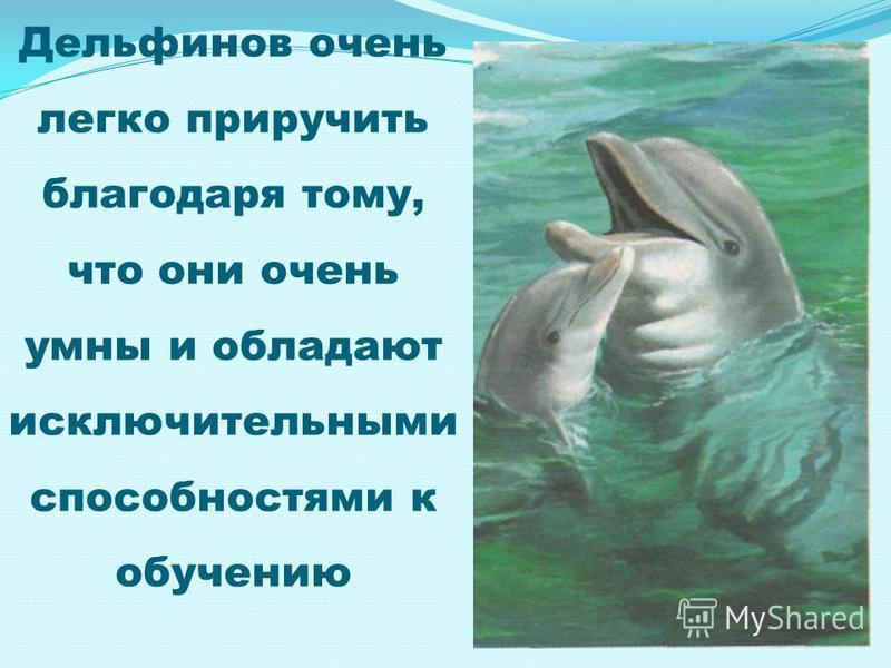 Дельфинов очень легко приручить благодаря тому, что они очень умны и обладают исключительными способностями к обучению