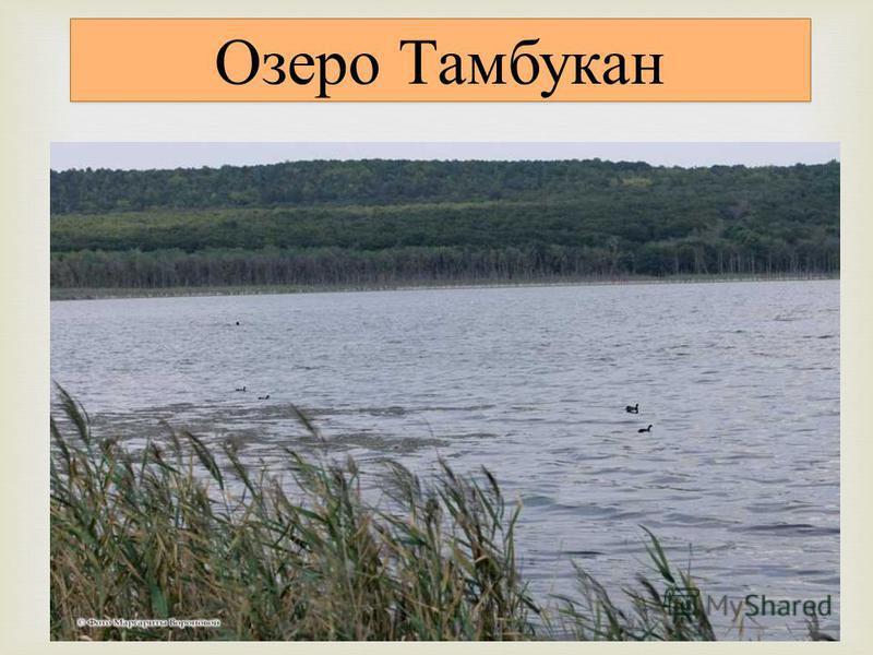 Тамбуканское озеро лежит в небольшой котловине у дороги Пятигорск - Нальчик. Длина озера 2 км, ширина до 1 км, глубина - до 10 м колеблется в различное время года в зависимости от количества выпавших осадков. Лечебные грязи озера Тамбукан сульфидные