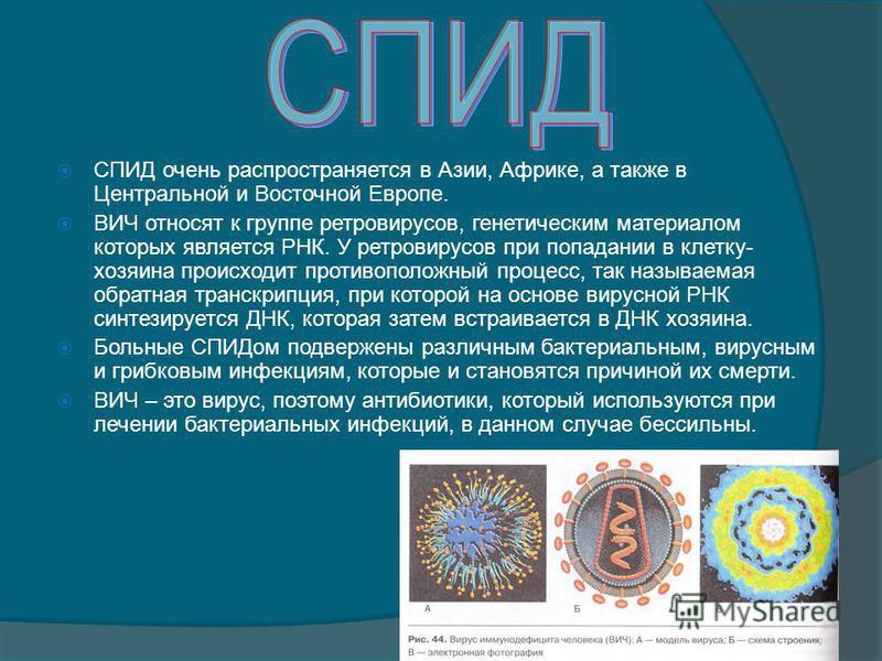 СПИД очень распространяется в Азии, Африке, а также в Центральной и Восточной Европе. ВИЧ относят к группе ретровирусов, генетическим материалом которых является РНК. У ретровирусов при попадании в клетку- хозяина происходит противоположный процесс,