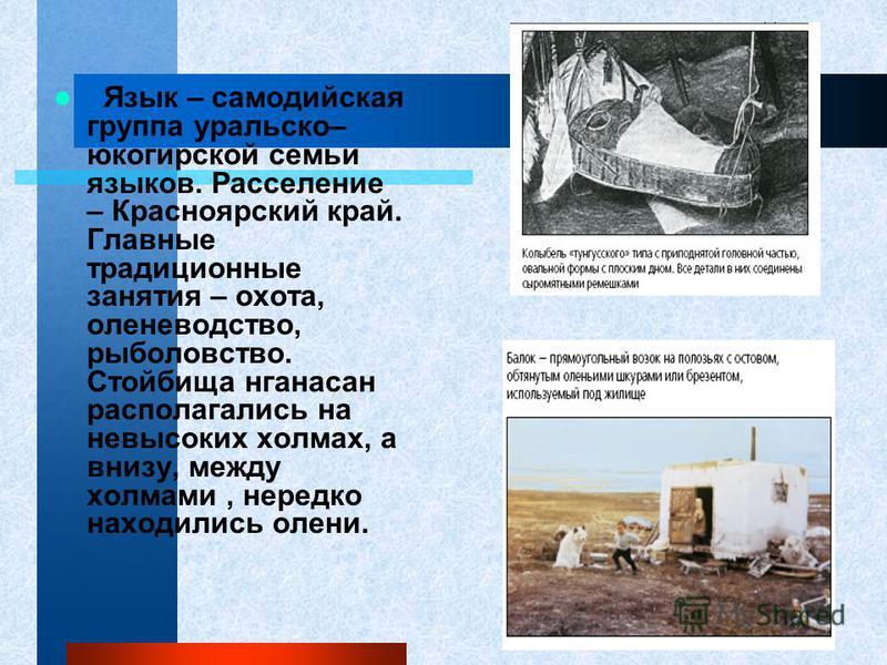 Язык – самодийская группа уральско– юкагирской семьи языков. Расселение – Красноярский край. Главные традиционные занятия – охота, оленеводство, рыболовство. Стойбища нганасан располагались на невысоких холмах, а внизу, между холмами, нередко находил