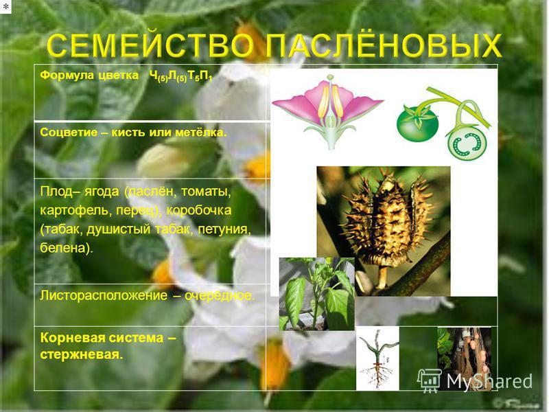 Значение для человека овощные эфиромасличные кормовые декоративные лекарственные