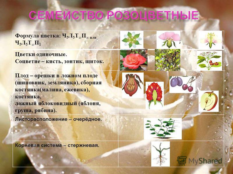 Значение для человека пищевые кормовые лекарственны е декоративные технические
