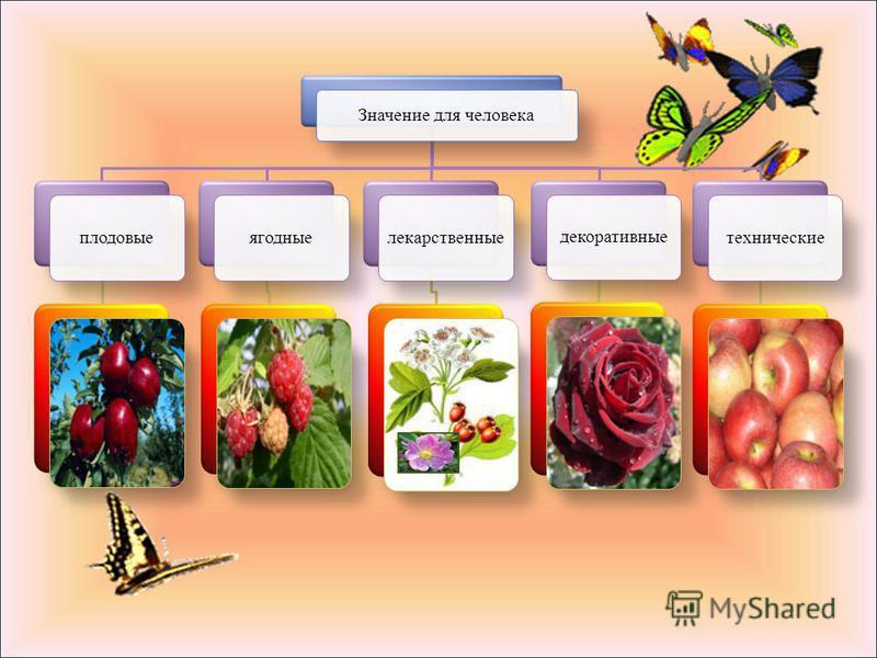 Формула цветка : Ч 5 Л 5 Т П или Ч 5 Л 5 Т П 1 Цветки одиночные. Соцветие – кисть, зонтик, щиток. Плод – орешки в ложном плоде ( шиповник, земляника ), сборная костянка ( малина, ежевика ), костянка, ложный яблоковидный ( яблоня, груша, рябина ). Лис