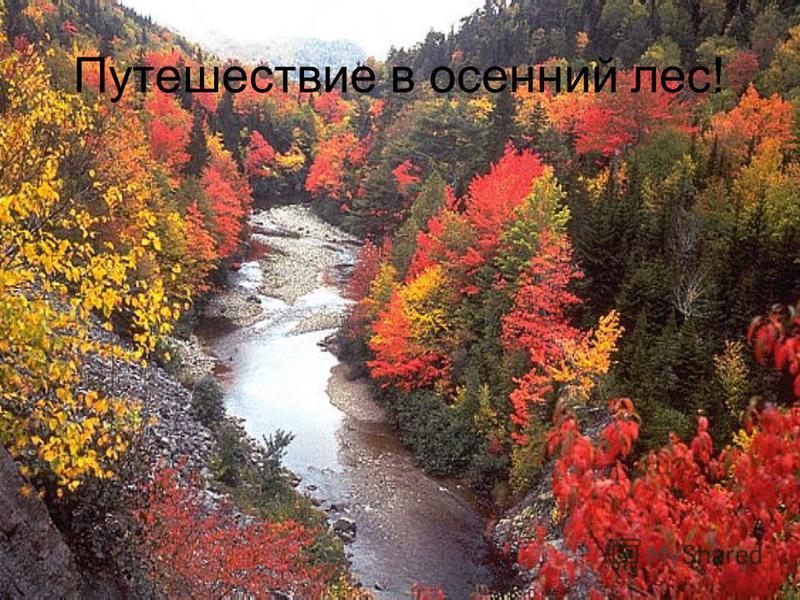 Путешествие в осенний лес!
