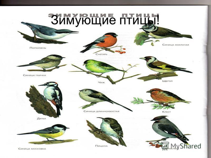Зимующие птицы!