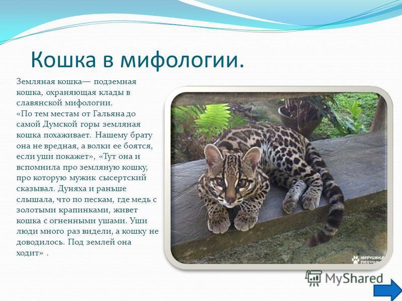 Кошка в мифологии. Земляная кошка подземная кошка, охраняющая клады в славянской мифологии. «По тем местам от Гальяна до самой Думской горы земляная кошка похаживает. Нашему брату она не вредная, а волки ее боятся, если уши покажет», «Тут она и вспом