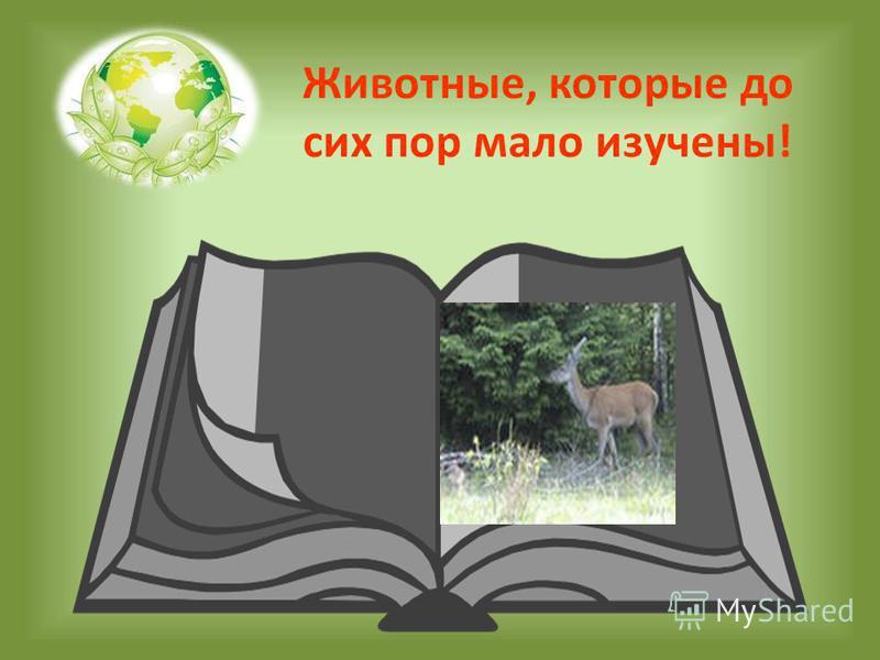 Животные, которые до сих пор мало изучены!