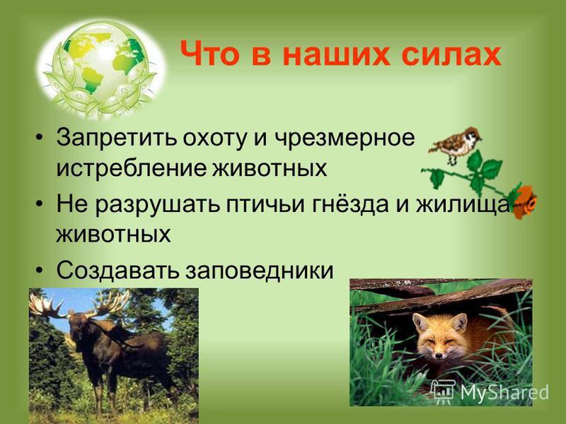 Что в наших силах Запретить охоту и чрезмерное истребление животных Не разрушать птичьи гнёзда и жилища животных Создавать заповедники