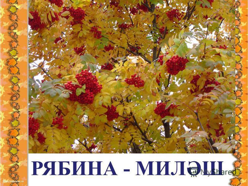 РЯБИНА - МИЛӘШ