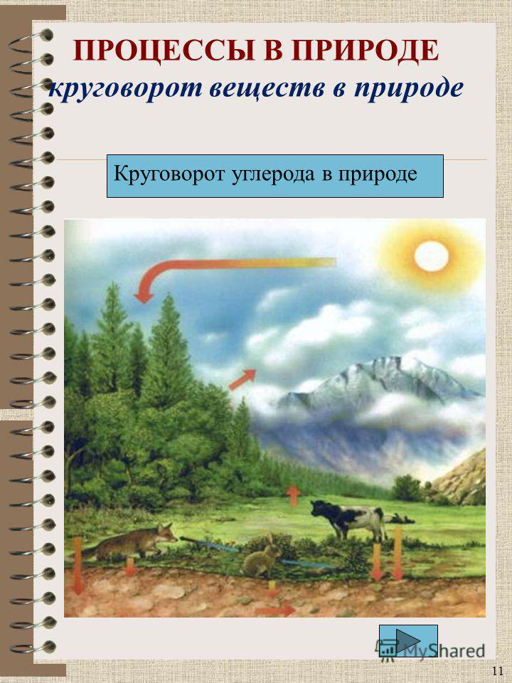 ПРОЦЕССЫ В ПРИРОДЕ круговорот веществ в природе 11 Круговорот углерода в природе