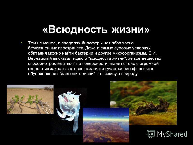 «Всюдность жизни» Тем не менее, в пределах биосферы нет абсолютно безжизненных пространств. Даже в самых суровых условиях обитания можно найти бактерии и другие микроорганизмы. В.И. Вернадский высказал идею о
