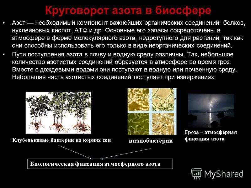 Круговорот азота в биосфере Азот необходимый компонент важнейших органических соединений: белков, нуклеиновых кислот, АТФ и др. Основные его запасы сосредоточены в атмосфере в форме молекулярного азота, недоступного для растений, так как они способны