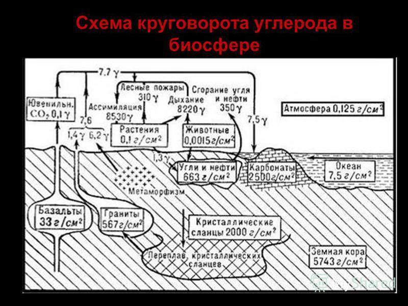 Схема круговорота углерода в биосфере