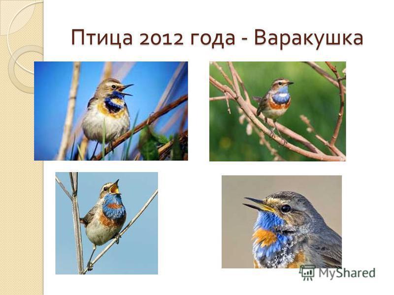 Птица 2012 года - Варакушка Птица 2012 года - Варакушка