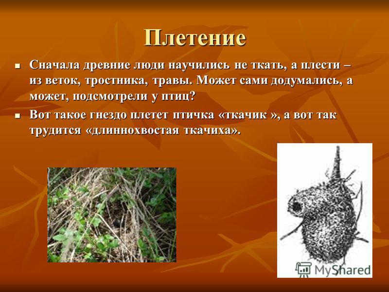 Плетение Сначала древние люди научились не ткать, а плести – из веток, тростника, травы. Может сами додумались, а может, подсмотрели у птиц? Сначала древние люди научились не ткать, а плести – из веток, тростника, травы. Может сами додумались, а може