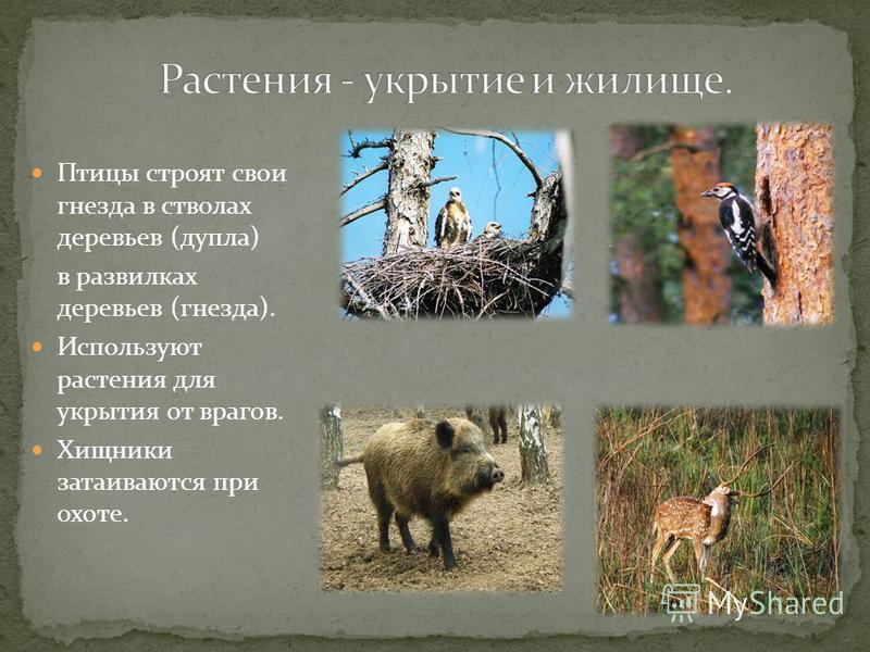 Птицы строят свои гнезда в стволах деревьев (дупла) в развилках деревьев (гнезда). Используют растения для укрытия от врагов. Хищники затаиваются при охоте.