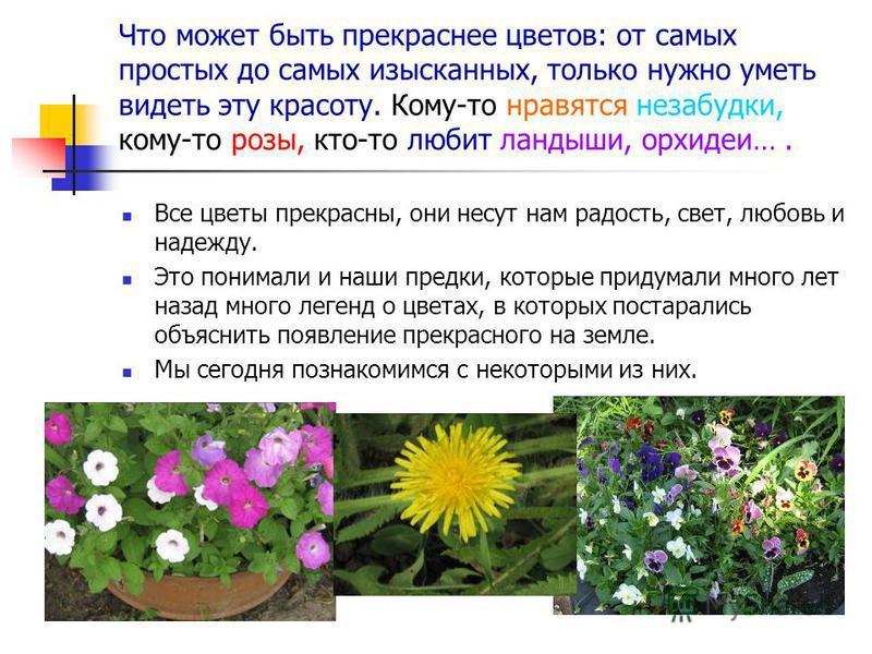 Что может быть прекраснее цветов: от самых простых до самых изысканных, только нужно уметь видеть эту красоту. Кому-то нравятся незабудки, кому-то розы, кто-то любит ландыши, орхидеи…. Все цветы прекрасны, они несут нам радость, свет, любовь и надежд