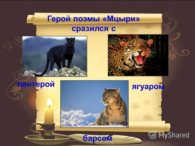 Герой поэмы «Мцыри» сразился с ягуаром барсом пантерой