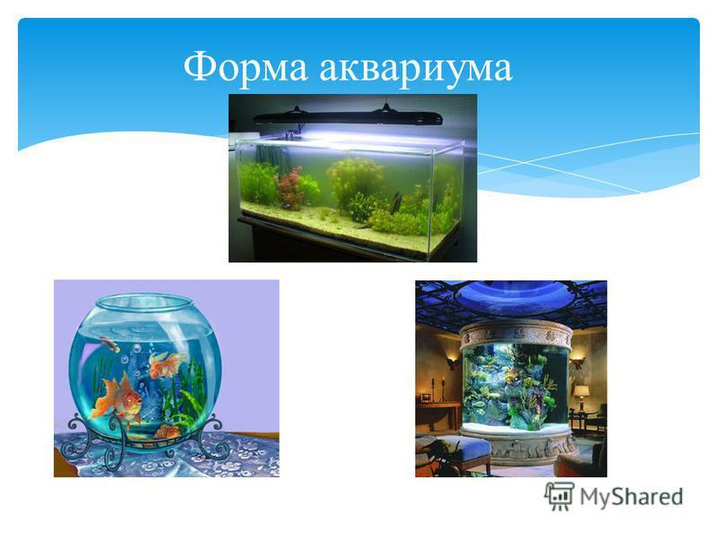 Форма аквариума