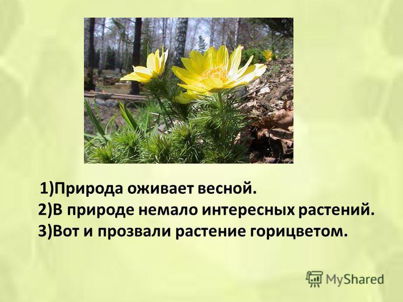 1)Природа оживает весной. 2)В природе немало интересных растений. 3)Вот и прозвали растение горицветом.